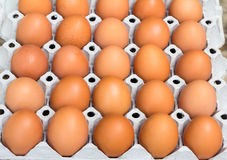 Chicken eggs in egg tray. Eggs in the package Stock Image