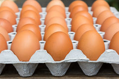 Chicken eggs in egg tray. Eggs in the package Royalty Free Stock Images
