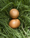 Chicken eggs in the farm fresh and best quality royalty free stock image