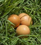 Chicken eggs in the farm fresh and best quality stock image