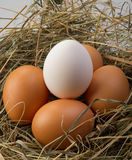 Chicken eggs Stock Image
