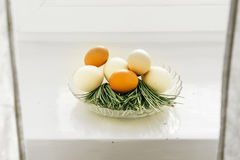 Chicken eggs in a glass bowl green branches Stock Images