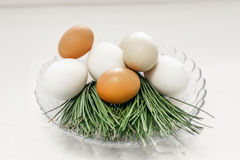 Chicken eggs in a glass bowl green branches Royalty Free Stock Photos