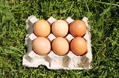 Chicken eggs on grass Stock Photo