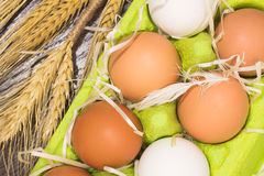 Chicken eggs in a green box. Chicken feather Stock Image