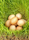 Chicken eggs between green wheat Royalty Free Stock Photography