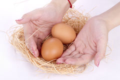 Chicken eggs in the hands Royalty Free Stock Image