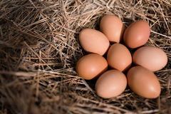 Chicken eggs in hay nest. At outdoor stock images
