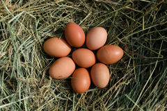Chicken eggs in hay nest. At outdoor royalty free stock photo