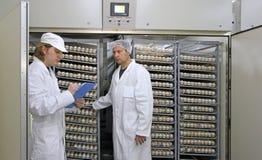 Chicken eggs in incubator. Farmers controlling chicken eggs in incubator Royalty Free Stock Photos