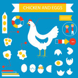 Chicken and eggs infographic set Royalty Free Stock Image