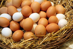 Chicken eggs just collected in the henhouse Royalty Free Stock Photo
