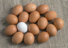 Chicken eggs, laid out in the form of one large egg Stock Photography