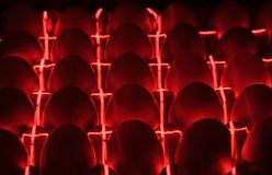 Chicken eggs, lie under infrared rays in an incubator. Close-up Stock Image