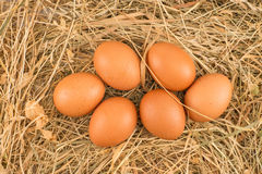 Chicken eggs lying on hay. Royalty Free Stock Photography