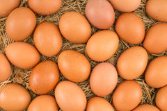 Chicken eggs lying on hay. Stock Images
