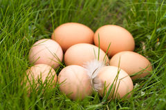 Chicken eggs lying in a nest of green grass Royalty Free Stock Image