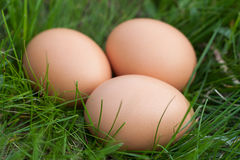 Chicken eggs lying in a nest of green grass Royalty Free Stock Images