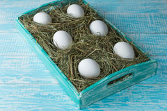 Chicken eggs. Chicken eggs in the manger in the decorated tray Stock Photo