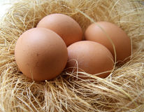Chicken eggs in a nest Royalty Free Stock Photos