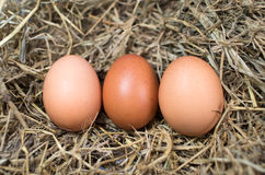 Chicken eggs. In the nest Royalty Free Stock Photos