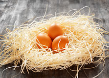 Chicken eggs in a nest Royalty Free Stock Images
