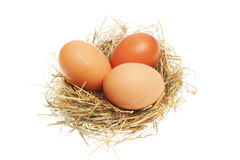 Chicken eggs in nest Stock Photos