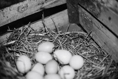 Chicken eggs in the nest Royalty Free Stock Images