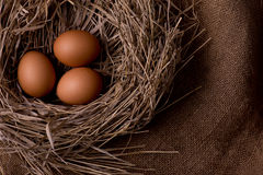 Chicken eggs in nest on burlap background Royalty Free Stock Image