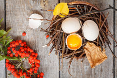 Chicken eggs in the nest Stock Photography