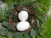 Eggs in a Nest Stock Photography