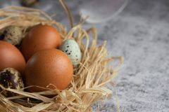 Chicken eggs in a nest of hay close-up on a light concrete background. Copy space. Agriculture. Chicken eggs are scattered randomly on a dark background stock photography