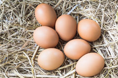 Chicken eggs on a nest of hay in its natural form . royalty free stock photos