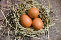 Chicken eggs in nest of hay on stone outdoor Stock Images