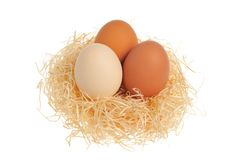 Chicken eggs in nest isolated on white background Royalty Free Stock Photo