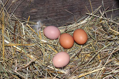 Chicken eggs in the nest. Stock Photography