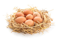 Chicken eggs in nest. Royalty Free Stock Image