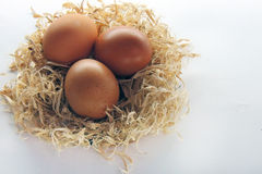 Chicken eggs in the nest. Three Chicken eggs in nest on white background Royalty Free Stock Photos
