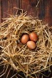 Chicken eggs in nest, top view Stock Photos