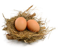 Chicken eggs in nest Stock Images