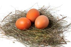 Chicken eggs in nest Stock Image
