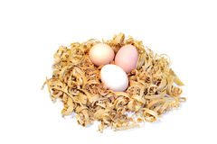 Chicken eggs in a nest of wood shavings Stock Photos
