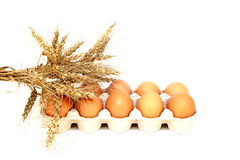 Chicken eggs in packing Stock Photography