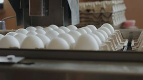 Eggs farm industrial production line stock video footage