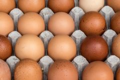 Chicken eggs pallet from the farm Stock Image