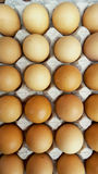 Chicken eggs in paper tray Stock Images