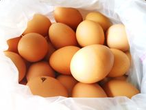 Chicken eggs in plastic bags stock photo