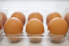 Chicken eggs in plastic box close-up. Stock Image