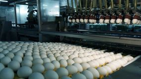 Chicken eggs at the poultry farm. farm, industry.  royalty free stock image