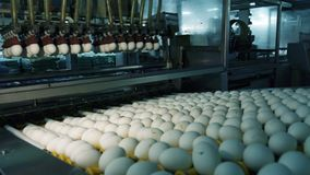 Chicken eggs at the poultry farm. farm, industry.  royalty free stock photo